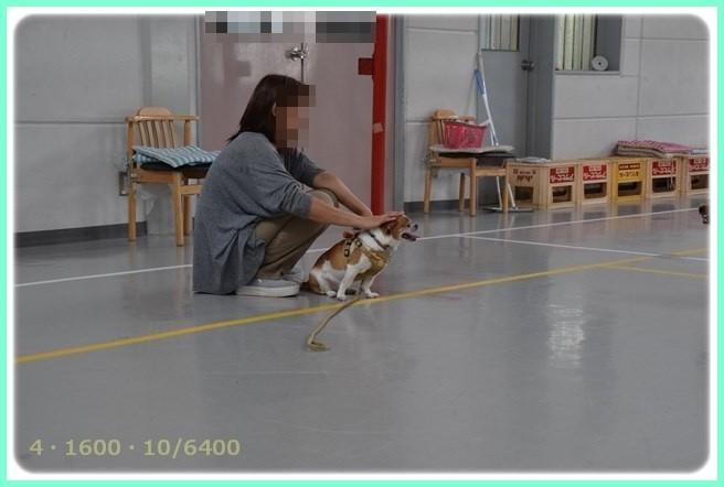 f:id:yasukazu01:20150624231936j:image