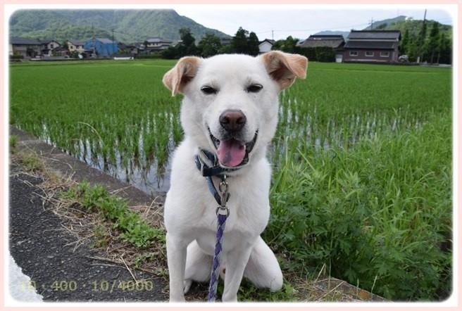 f:id:yasukazu01:20150628203601j:image