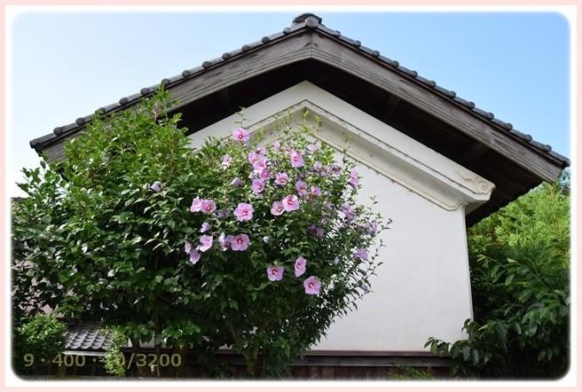 f:id:yasukazu01:20150628204142j:image