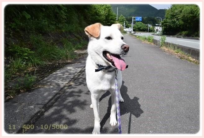 f:id:yasukazu01:20150628210754j:image