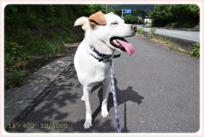 f:id:yasukazu01:20150628210811j:image