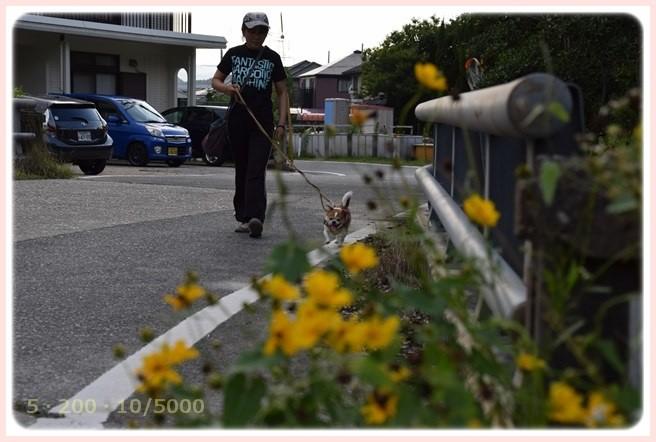 f:id:yasukazu01:20150629223955j:image