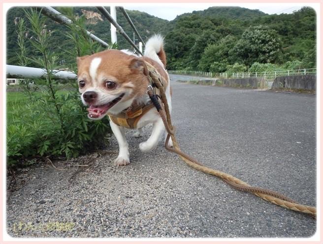 f:id:yasukazu01:20150629225052j:image