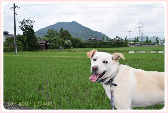f:id:yasukazu01:20150704205601j:image