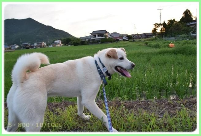 f:id:yasukazu01:20150712200554j:image