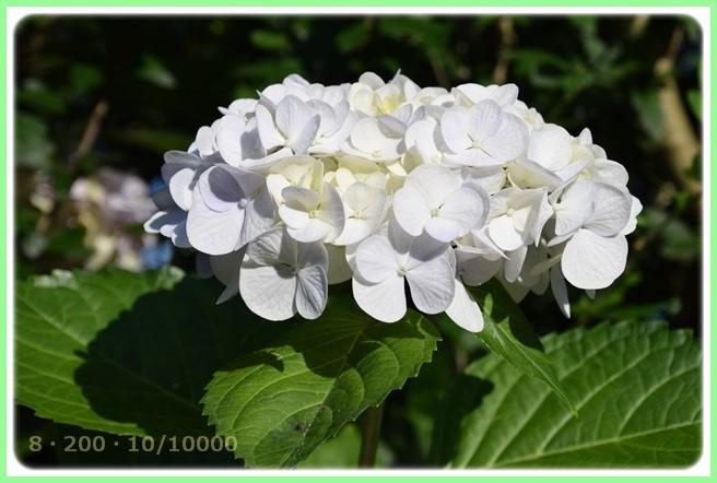 f:id:yasukazu01:20150715204139j:image