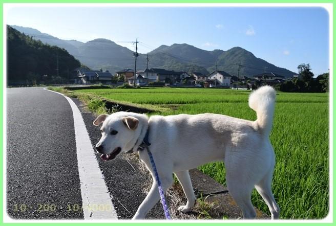 f:id:yasukazu01:20150715204239j:image