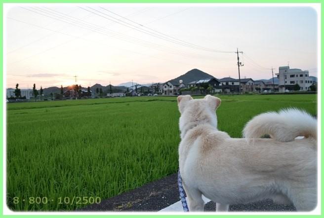 f:id:yasukazu01:20150715204851j:image