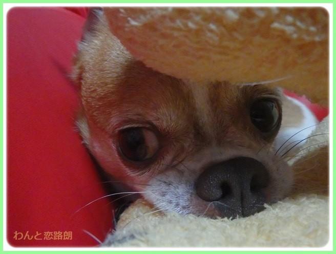 f:id:yasukazu01:20150715210040j:image