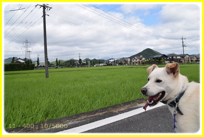 f:id:yasukazu01:20150725215051j:image