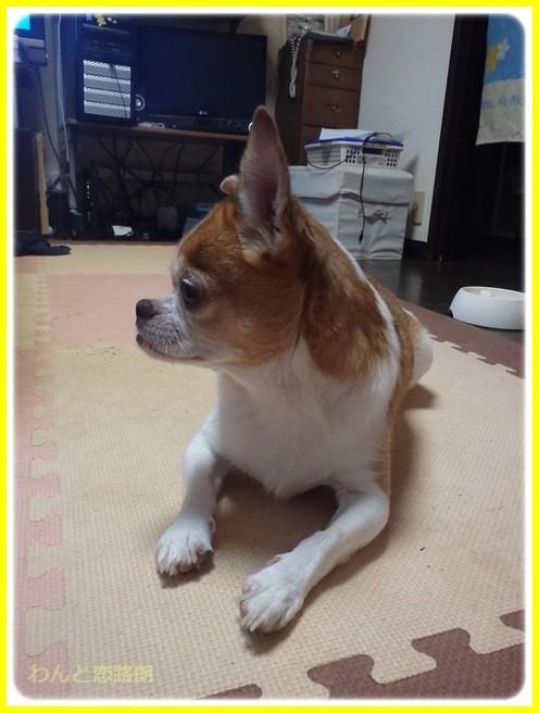 f:id:yasukazu01:20150727215540j:image