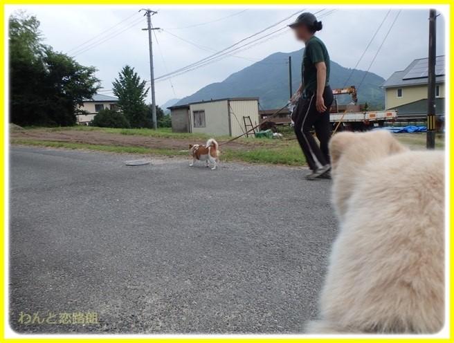 f:id:yasukazu01:20150731223701j:image