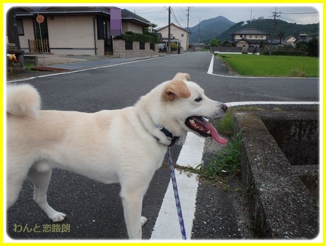 f:id:yasukazu01:20150731223858j:image