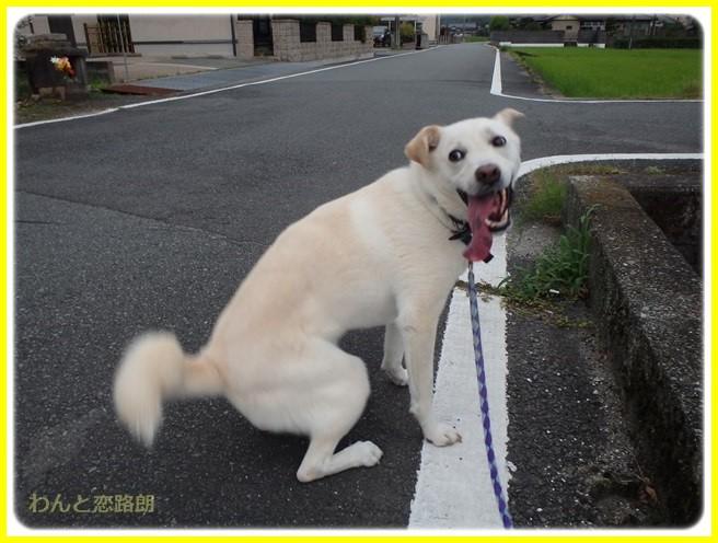 f:id:yasukazu01:20150731224007j:image