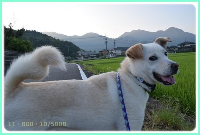 f:id:yasukazu01:20150801213305j:image