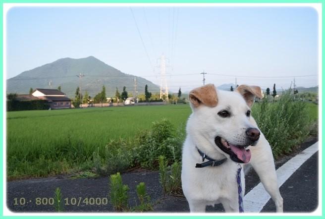f:id:yasukazu01:20150801213400j:image