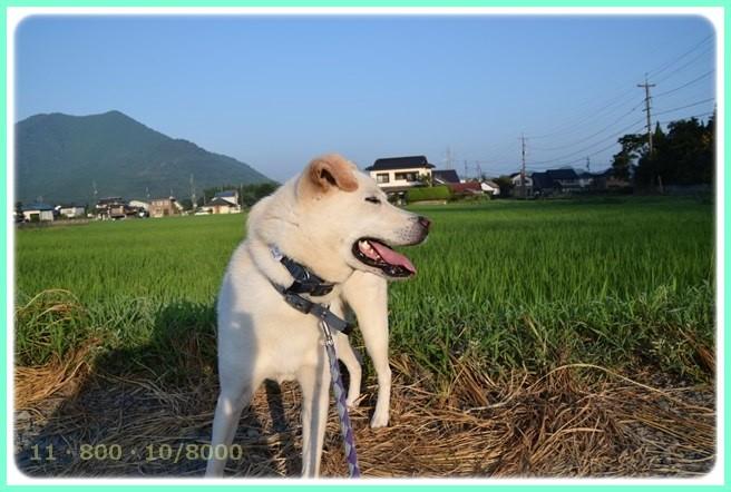 f:id:yasukazu01:20150801214538j:image
