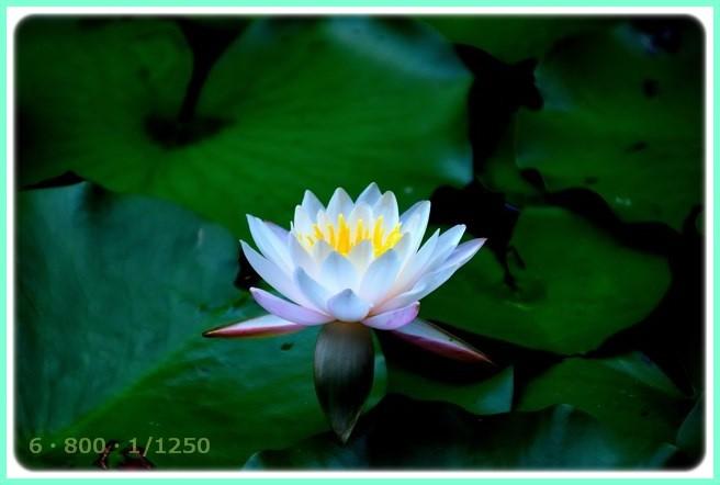 f:id:yasukazu01:20150805221359j:image