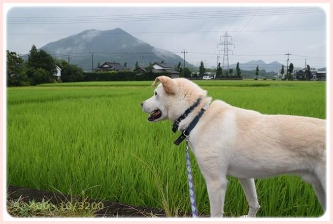 f:id:yasukazu01:20150812204852j:image