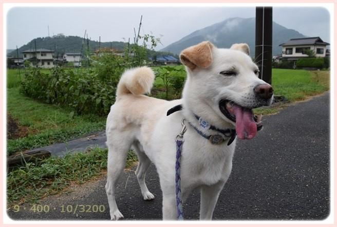 f:id:yasukazu01:20150812205413j:image