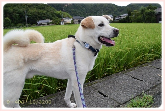 f:id:yasukazu01:20150813131733j:image
