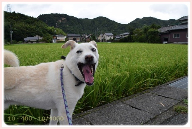 f:id:yasukazu01:20150813131827j:image