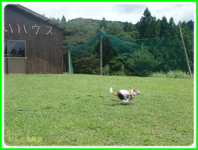 f:id:yasukazu01:20150815202917j:image