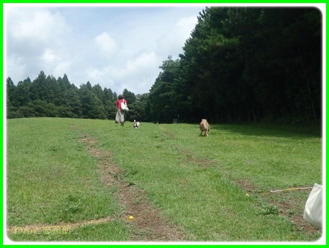 f:id:yasukazu01:20150816215020j:image
