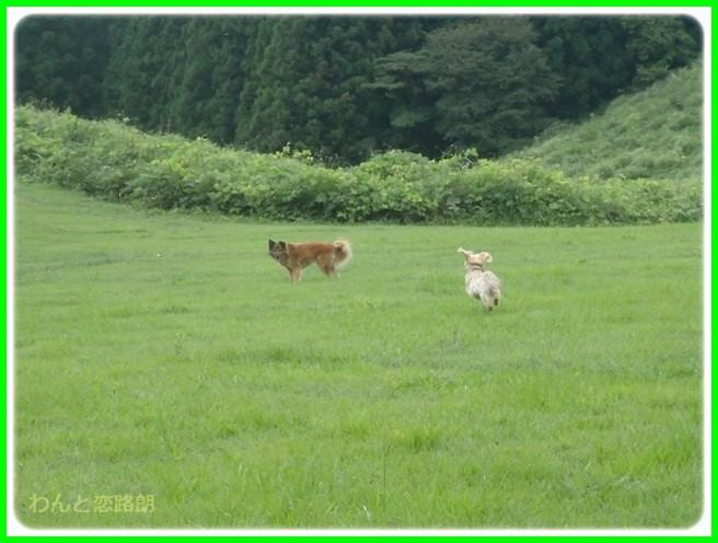 f:id:yasukazu01:20150817222012j:image