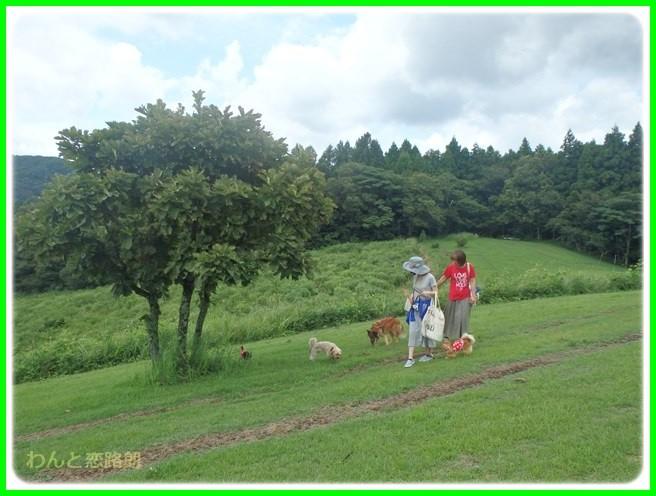 f:id:yasukazu01:20150817223231j:image