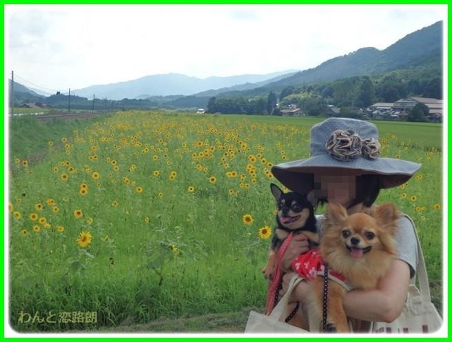 f:id:yasukazu01:20150820223939j:image