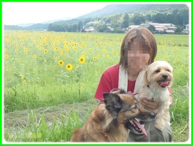 f:id:yasukazu01:20150820224033j:image