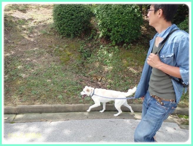 f:id:yasukazu01:20150821223413j:image