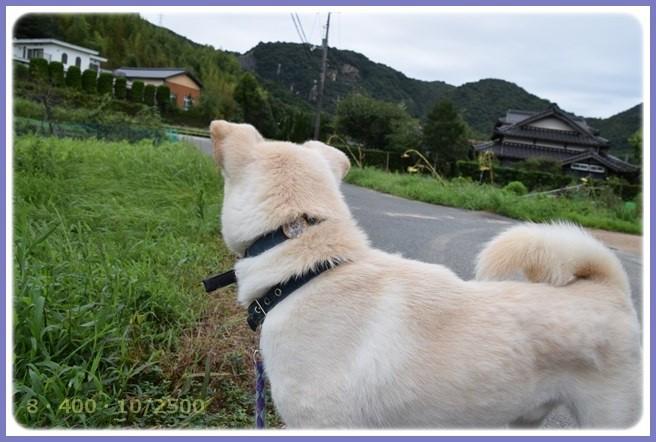 f:id:yasukazu01:20150826203827j:image