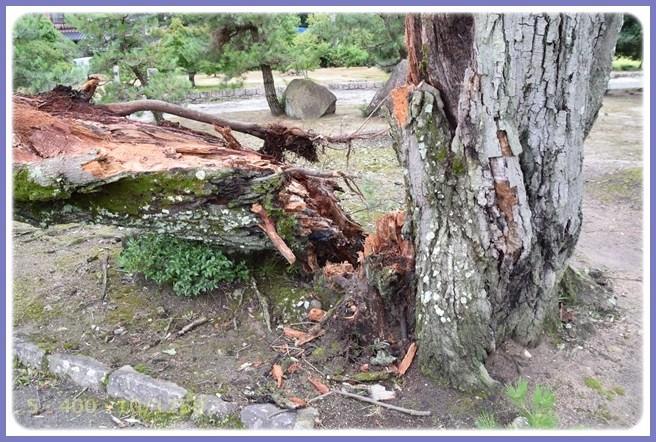 f:id:yasukazu01:20150826204112j:image
