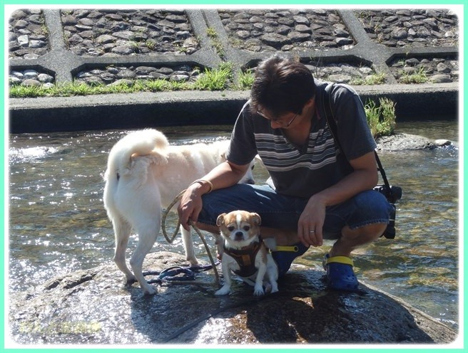 f:id:yasukazu01:20150829103148j:image