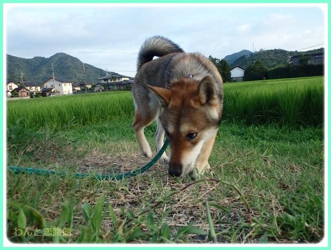 f:id:yasukazu01:20150831112712j:image