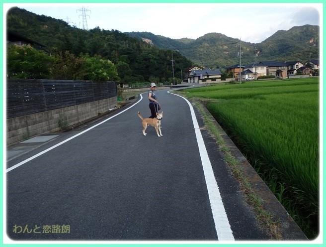 f:id:yasukazu01:20150831112930j:image