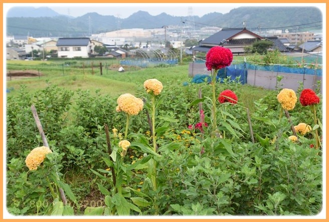 f:id:yasukazu01:20150905211511j:image