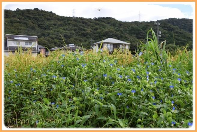 f:id:yasukazu01:20150908141055j:image
