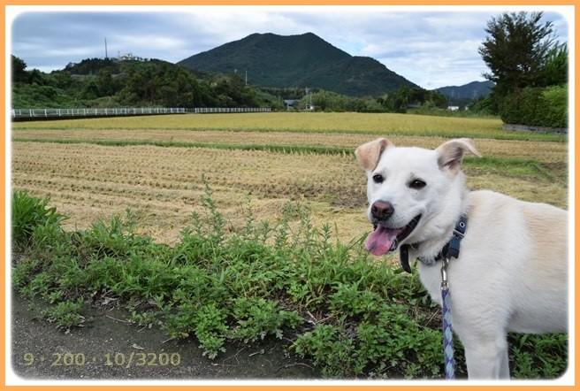 f:id:yasukazu01:20150908141355j:image