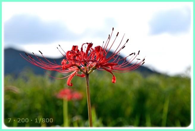 f:id:yasukazu01:20150919204840j:image