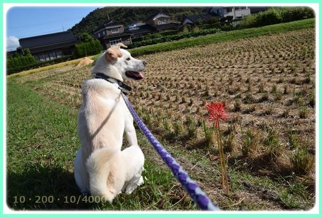 f:id:yasukazu01:20150919204929j:image