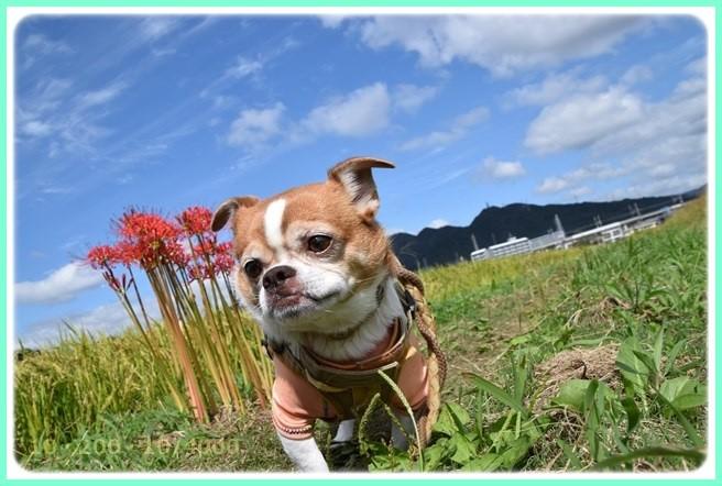 f:id:yasukazu01:20150919205221j:image