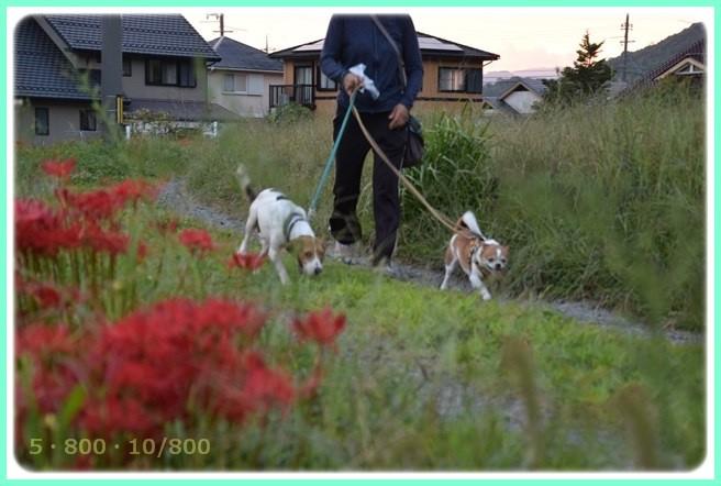 f:id:yasukazu01:20150920202454j:image