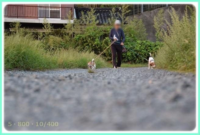 f:id:yasukazu01:20150920202930j:image