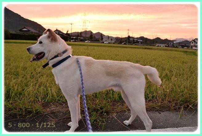 f:id:yasukazu01:20150920203153j:image