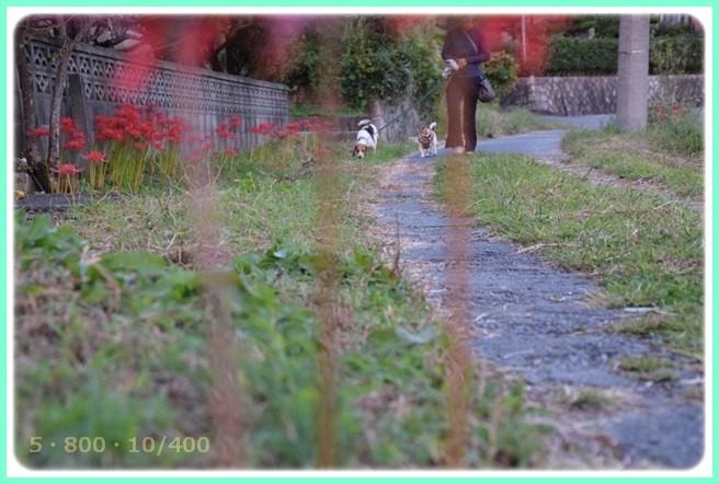 f:id:yasukazu01:20150920203329j:image