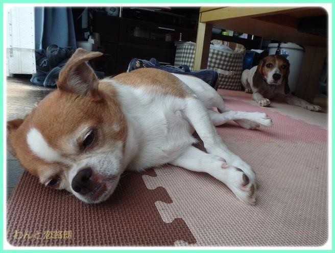 f:id:yasukazu01:20150923213412j:image