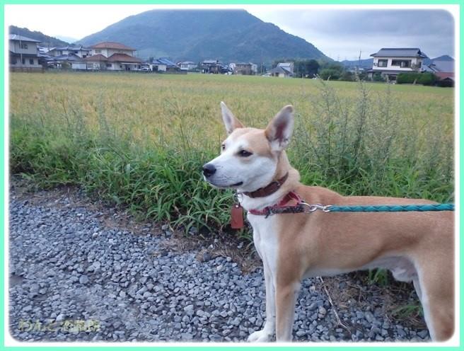 f:id:yasukazu01:20150928203817j:image